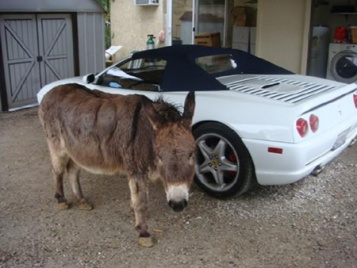 donkey-ferrari-10-commandments